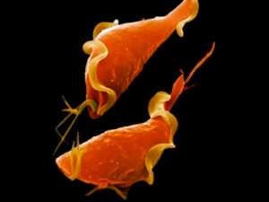 Сколько дней высыпает герпес на теле. Герпес на теле: виды высыпаний, профилактика и лечение, причины. Виды сыпи на теле